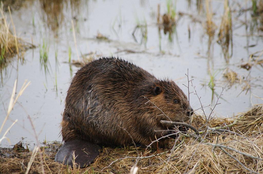 Elk Island National Park, Alberta, Canada